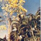 FLOWER TREE HAWAII PICTURE POSTCARD #159 UNUSED