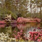 MIRROR LAKE AT BELLINGRATH GARDENS MOBILE ALABAMA PICTURE POSTCARD #167 UNUSED