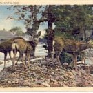 THE DEER ARE PLENTIFUL HERE  ORR MINNESOTA LINEN POSTCARD #176 USED 1940