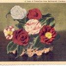 A VASE OF CAMELLIAS FROM BELLINGRATH GARDENS MOBILE ALABAMA LINEN POSTCARD #179 UNUSED