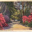 AZALEAS AND SPANISH MOSS IN BELLINGRATH GARDENS MOBILE ALABAMA LINEN POSTCARD #181 UNUSED