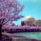 FAMED CHERRY BLOSSOMS JEFFERSON MONUMENT WASHINGTON D.C. PICTURE POSTCARD #194 UNUSED