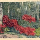 GARDEN SCENE IN BELLINGRATH GARDENS MOBILE ALABAMA LINEN POSTCARD #195 UNUSED