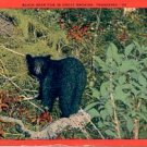 BLACK BEAR CUB IN GREAT SMOKIES TENNESSEE LINEN POSTCARD #217 USED 1947