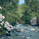 MOUNTAIN LAUREL GREAT SMOKY MOUNTAINS NATIONAL PARK LINEN POSTCARD #228 USED 1954