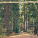 CALIFORNIA'S REDWOOD EMPIRE REDWOOD GIANTS ALONG THE HIGHWAY LINEN POSTCARD #240 USED 1947