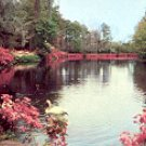 MIRROR LAKE WITH SWANS BELLINGRATH GARDENS MOBILE ALABAMA COLOR PICTURE POSTCARD #578 UNUSED