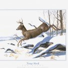 2002 PRINT #32: YOUNG BUCK SIGNED DON BALKE  MINT