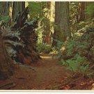 VIRGIN REDWOOD FOREST - VINTAGE ORIGINAL COLOR POSTCARD 1984 UNUSED MINT # 616