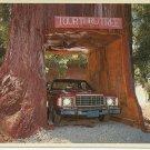 KLAMATH TOUR THRU TREE -KLAMATH CALIFORNIA - VINTAGE COLOR POSTCARD 1984 UNUSED MINT # 617