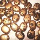 25pcs. 14mm Metallic Gold Brown