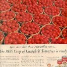 1955  Campbell ad (# 2952)