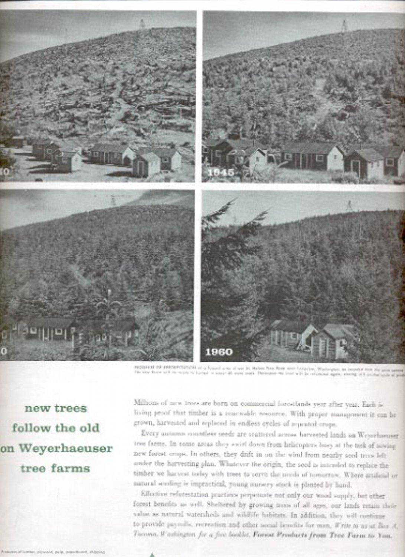 1960 Weyerhaeuser Company   ad (#5431)