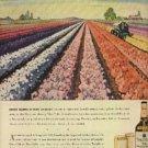 1946 Seagram's V.O. Canadian ad (# 831)