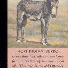 Hopi Indian Burro-  Postcard- (# 31)