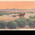 Arizona Afterglow -  Postcard- (# 62)