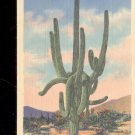 A Giant Cactus, Arizona-   Postcard- (# 20)