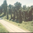 Kudzu along the highway - Mississippi  postcard   (#249)