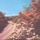 Flame Azalea and Mountain Laurel on The Blue Ridge Parkway NC  postcard   (#250)