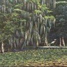 Wakulla Springs Lodge- Wakulla Springs, Florida     postcard   (#259)