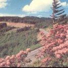 Mt. Mitchell State Park Western North Carolina  Postcard  (# 304)
