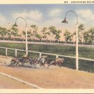 Greyhound Racing in Florida   Postcard  (#329)