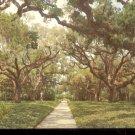 Live Oak walk Brookgreen Gardens South Carolina      Postcard(#3)  (# 394)
