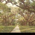 Live Oak walk Brookgreen Gardens South Carolina      Postcard(#2)  (# 395)