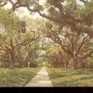 Live Oak walk Brookgreen Gardens South Carolina      Postcard   (# 396)