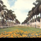 Stately Royal Palm trees along a typical Florida avenue  Postcard   (# 407)