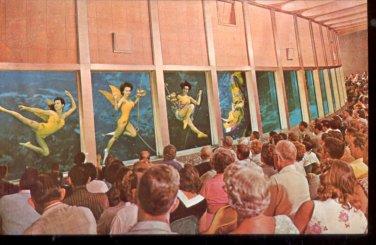 Weeki Wachee visitors underwater and view Florida Mermaids   Postcard   (# 409)
