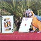 Macaw playing cards at Weeki Wachee Florida    Postcard   (# 411)