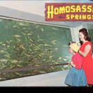 Nature's Fishbowl Spring- Homosassa Springs, Florida   Postcard   (# 412)
