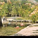 Homosassa Springs, Florida- The waterfowl of the World Park   Postcard  (# 414)
