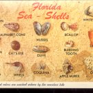 Shells of brilliant colors are washed ashore by the tide     Postcard (#437)