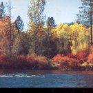 American River in Autumn. Washington     Postcard (#447)