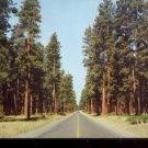 Ponderosa Pine or Yellow Pine  Cascade Range in Oregon     Postcard (#453)
