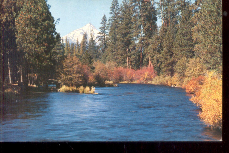 Metolius River and Mt. Jefferson, Central Ore.     Postcard (#454)