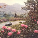 Rhododendron in Spring along Oregon highways      Postcard (#501)