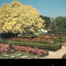 Spanish Garden and Ghost Tree Portland, Oregon       Postcard (#503)