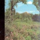 Prairie Wild Rose Rose Setigera  state flower - North Dakota   Postcard  (# 593)