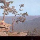 Scenic View  of Ozark Mountains      Postcard- (# 609)