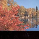 Red Maple on the Lake      Postcard     (# 708)
