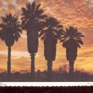 Palms in the Sunset    Postcard   (# 737)