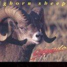 Bighorn Sheep Colorado's State Animal     Postcard   (# 750)