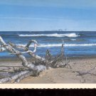 Driftwood  - Michigan     Postcard   (# 753)