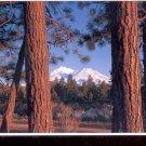 Mt. Shasta  , California       Postcard   (# 768)