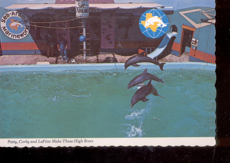 Patty, Corky and LaFitte Make Three High Bows - Texas      Postcard  (# 786)