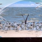 "A gathering of ""feathered friends"" on the Gulf Coast      Postcard  (# 795)"