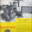 Nov. 1953 Terramycin antibiotic for animals ad (#5597)